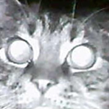 Cat Murder